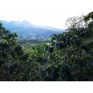 Kolumbie Los Naranjos