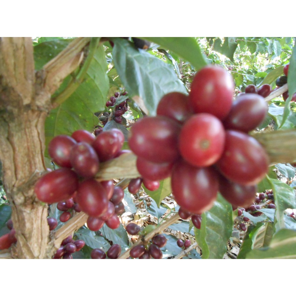 Filtrovaná káva pro začátečníky
